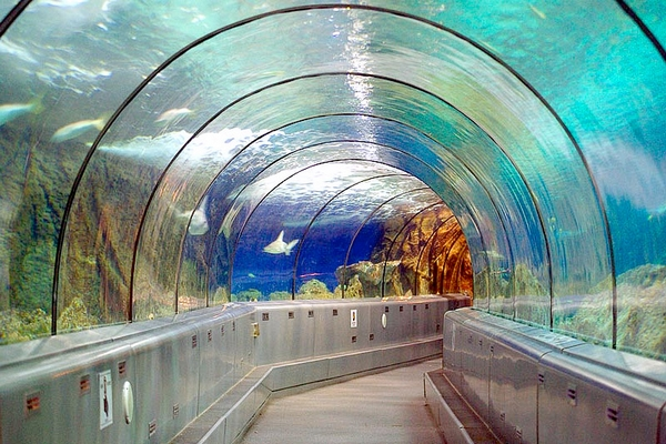 tunnel_requins_600